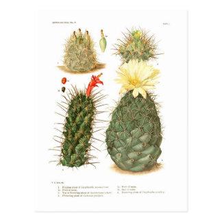 Especie del cactus tarjetas postales