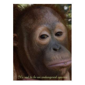 Especie en peligro de orangután de la fauna tarjetas postales