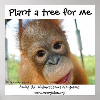 Especie en peligro orangután lindo de la fauna póster