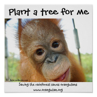 Especie en peligro orangután lindo póster