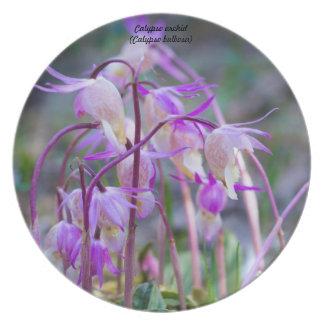 Especie: Orquídea del Calypso Plato