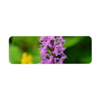 Especie protegida orquídea manchada flor púrpura etiqueta de remite