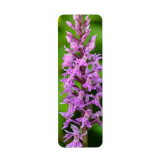 Especie protegida orquídea manchada flor púrpura etiquetas de remite