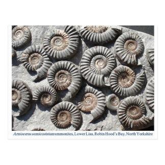 Espécimen multi de la amonita de Arinoceras Postal