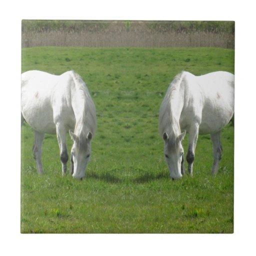 Espejo del caballo teja