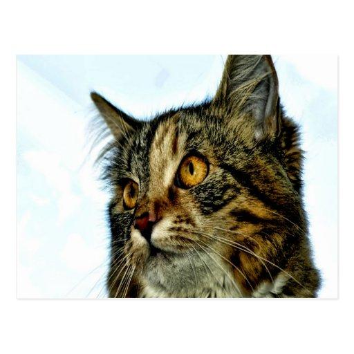 espera del gatito del gato para el amor de la mamá postal