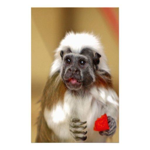 espera del tamarin del mono para el amor papelería personalizada