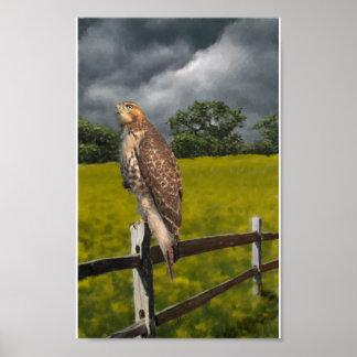 Esperando la tormenta - halcón rojo de la cola póster