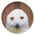 Esperándole mi pájaro lindo del amor observa plato de cena
