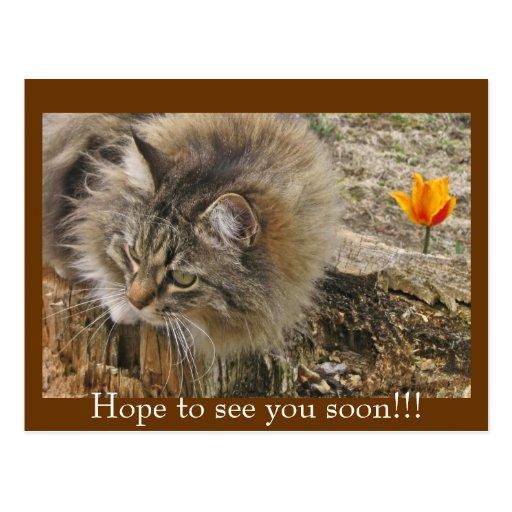¡Esperanza de verle pronto!!! Tarjeta Postal