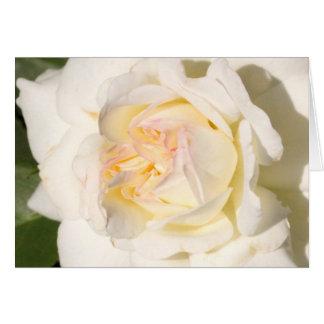 Esperas del rosa blanco tarjetas
