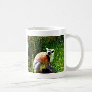espere los prosimians atados anillo del lemur del taza