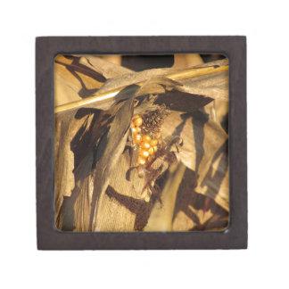 Espiga de trigo madura en la puesta del sol cajas de regalo de calidad