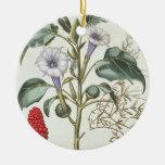 """Espina Apple, del """"Hortus Eystettensis"""" por Bas Adorno De Navidad"""