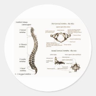 Espina dorsal pegatina redonda