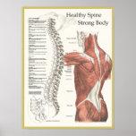 Espina dorsal sana, poster fuerte de la quiropráct