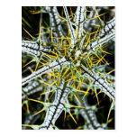 Espinas amarillas del cardo, naturales tarjeta postal