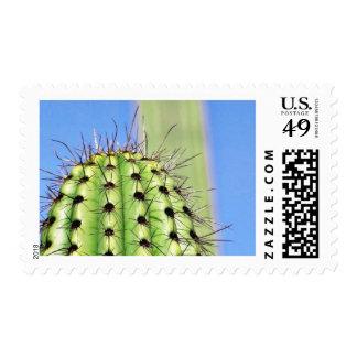 Espinas verdes del cactus