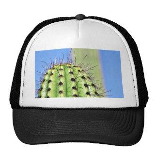 Espinas verdes del cactus gorro