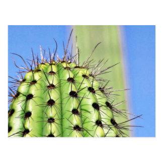 Espinas verdes del cactus postal