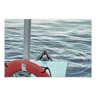 Espío un delfín póster