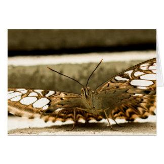 Espío una mariposa
