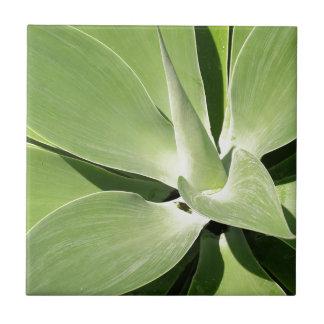 Espirales verdes naturales azulejo cuadrado pequeño