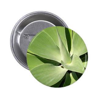 Espirales verdes naturales pin