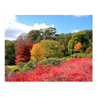 Esplendor del otoño, colinas de Adelaide Postales