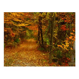 Esplendor del otoño en Nueva Inglaterra Tarjetas Postales