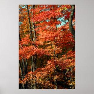 Esplendor del otoño impresiones