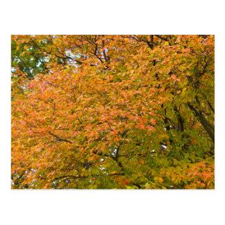 Esplendor del otoño postal