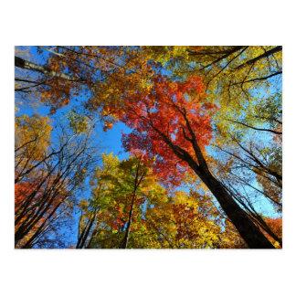 Esplendor del otoño tarjeta postal