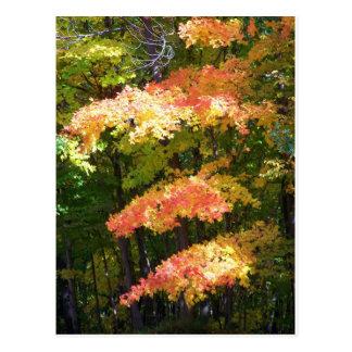 esplendor del otoño tarjetas postales