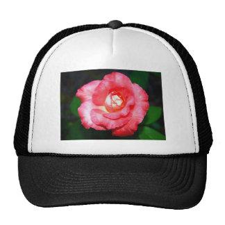 Esplendor rosado gorras