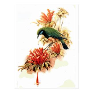 Esplendor tropical postal