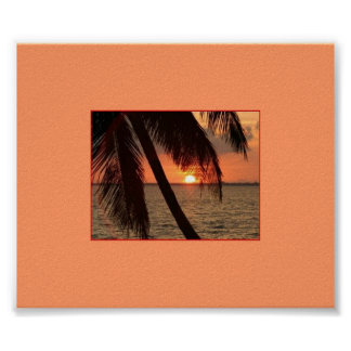 Esplendor tropical póster