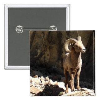 Espolón de las ovejas de Bighorn cerca de rocas en Pin Cuadrada 5 Cm