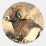 Espolón del Bighorn Etiqueta Redonda