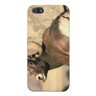 Espolón del Bighorn iPhone 5 Protector