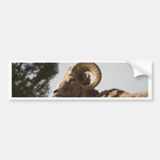 Espolón del Bighorn Pegatina Para Auto