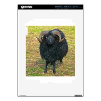Espolón negro iPad 3 pegatinas skins