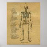 Esqueleto alemán de la impresión de la anatomía de posters