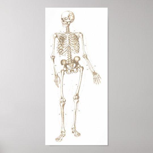 Esqueleto blanqueado póster