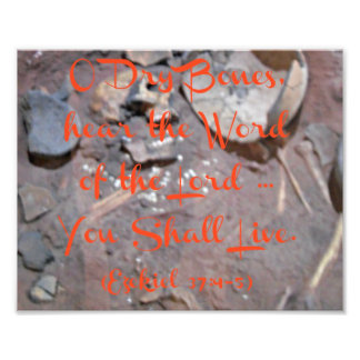 Esqueleto con los huesos secos del verso O de la b Cojinete