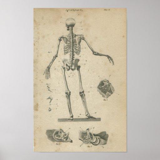 Esqueleto de la impresión de la anatomía de Vinatg