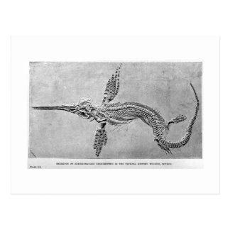 Esqueleto de la postal del arte del Ichthyosaurus