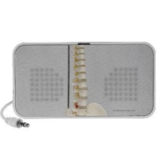 Esqueleto de la quiropráctica laptop altavoces