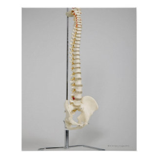 Esqueleto de la quiropráctica posters