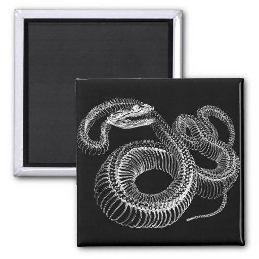 Esqueleto de la serpiente de cascabel imán cuadrado